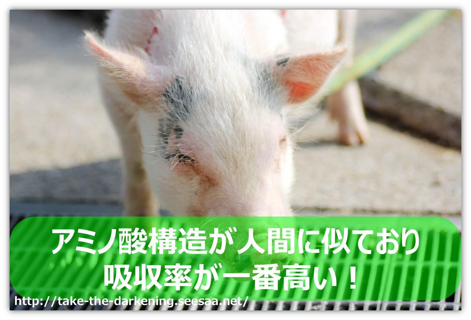 豚プラセンタ.jpg